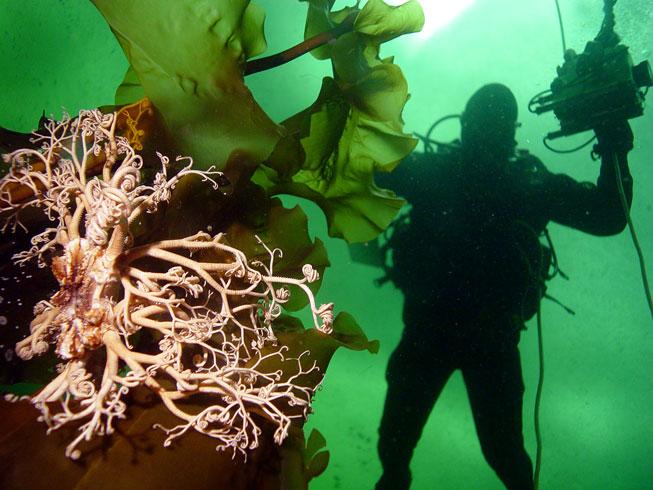 Клуб подводный мир северного моря